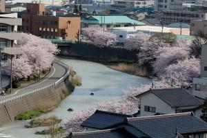窓から見える桜1